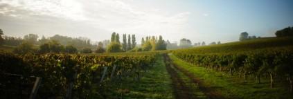 Bordeaux / Bordeaux supérieur